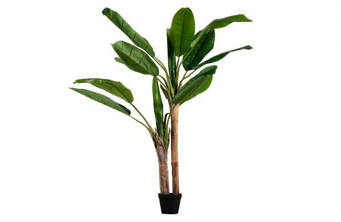 Woood-Bananenpflanze-grün