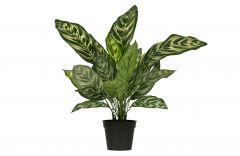Woood-Aglaonema-Kunstpflanze-grün-50-cm