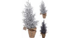 Weihnachtsbaum im Topf 35 cm 2 Sorten